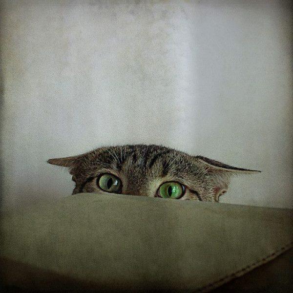 Наблюдательный кот