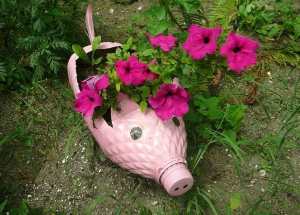 Клумба в виде свинки