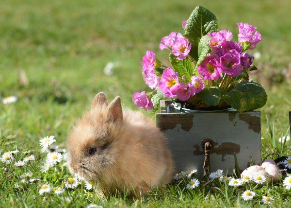 Кролик у цветов