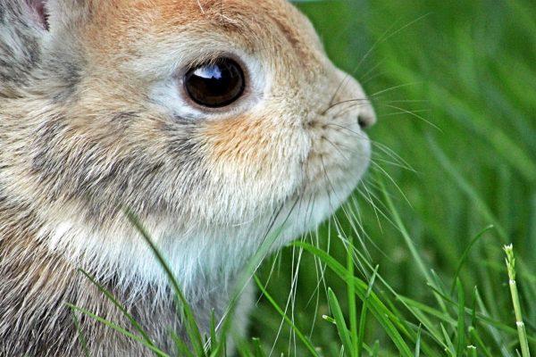 Пятнистый маленький кролик