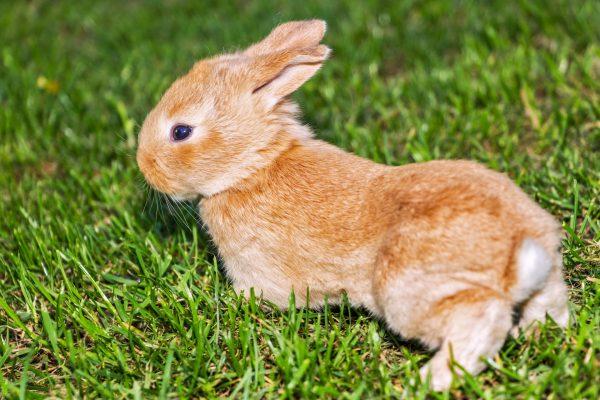 Забавный рыжий кролик