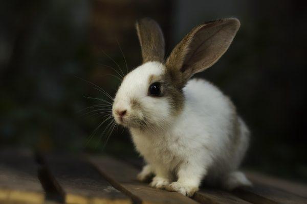 Очаровательный пятнистый кролик