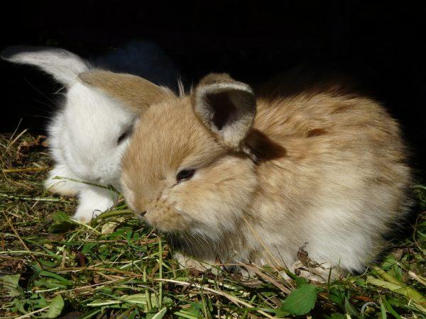 Пара очаровательных кроликов