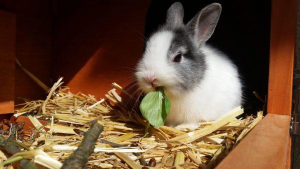 Кролик кушает базилик