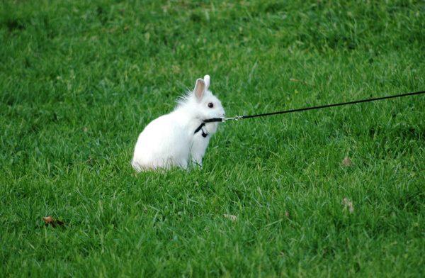 Кролик на прогулке