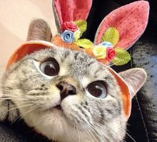 Нала – не просто популярная кошка