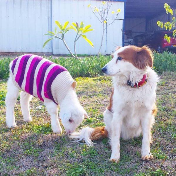 козлёнок и собака