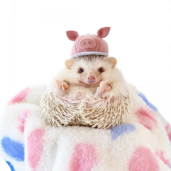ёжик с забавной шляпкой