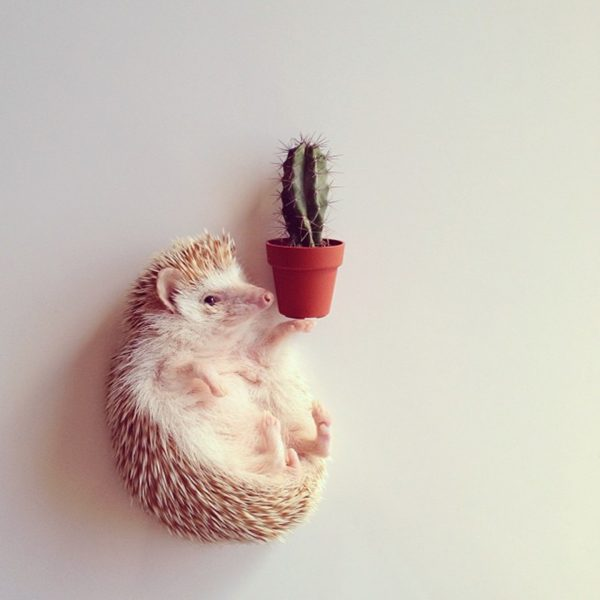ёжик и кактус
