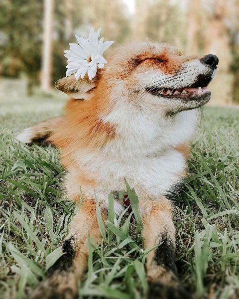 джунипер с цветком