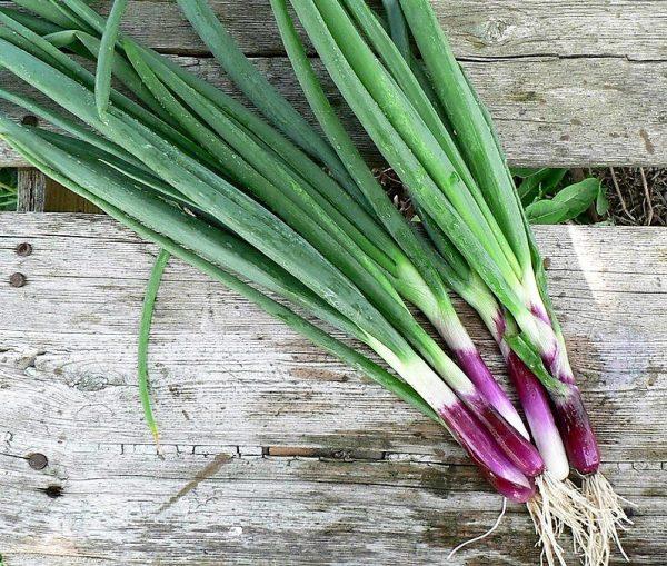 лук-батун салатный 35