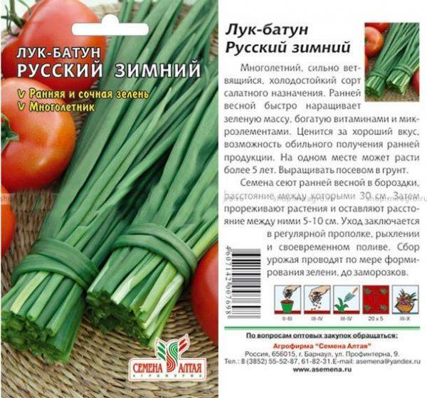 русский зимний лук-батун