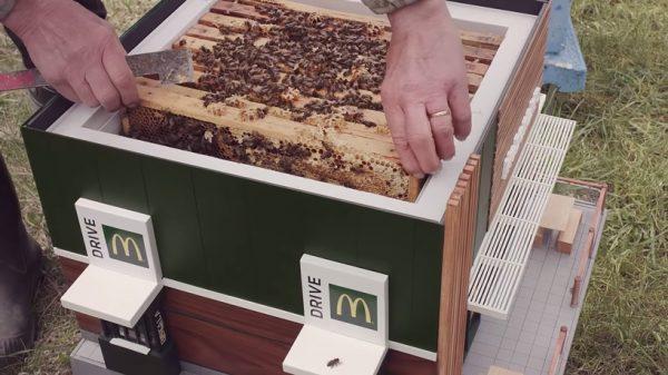 Улей в виде McDonald's