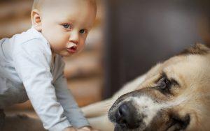 собака и младенец