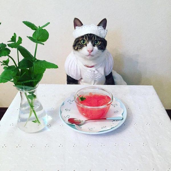 Кот Маро