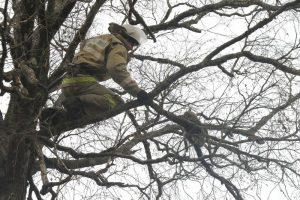 спасли кота, просидевшего на дереве восемь суток