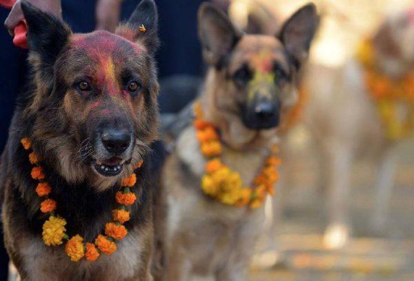 Собачий фестиваль в Непале