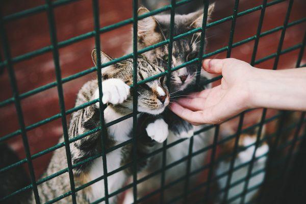 Приют для животных
