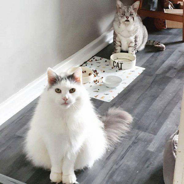 Тоби и Куинтон