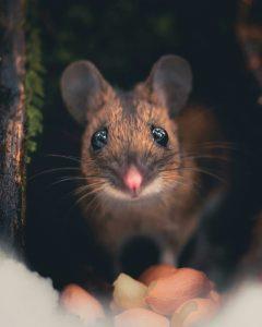 мышь в сарае