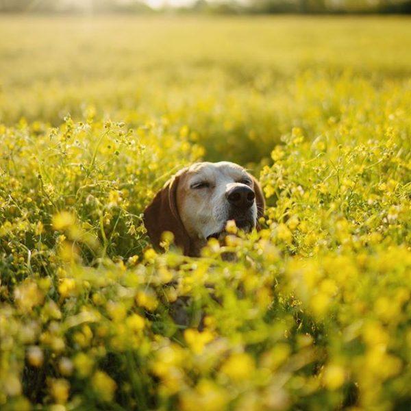 Пёс-путешественник Мэдди