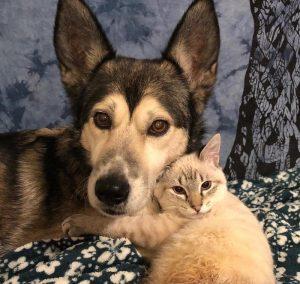 собака и парализованный котенок