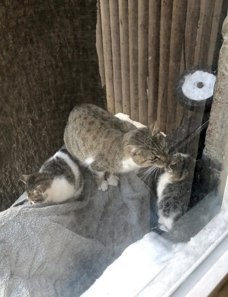 Кошка Чанк Чанк
