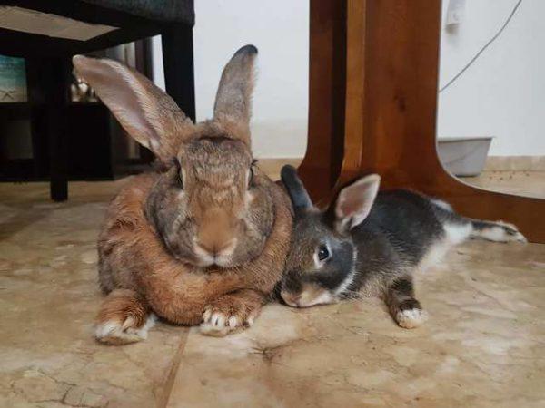 Кролики Лилли и Ромео