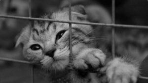 изъятие животного за долги