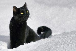 чёрный котенок на снегу