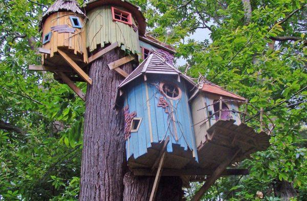 Яркие комнаты на дереве