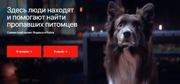 Сайт поиска животных от «Яндекса»