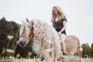 лошадь хафлингер шторм