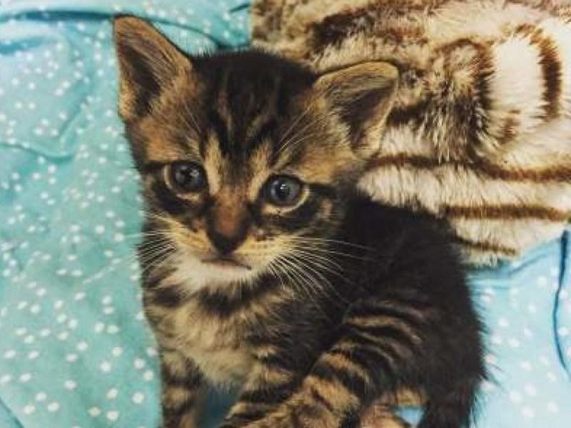 Котёнок кода с грустной мордочкой
