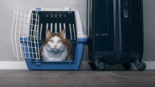 Кошка в переноске рядом с чемоданом