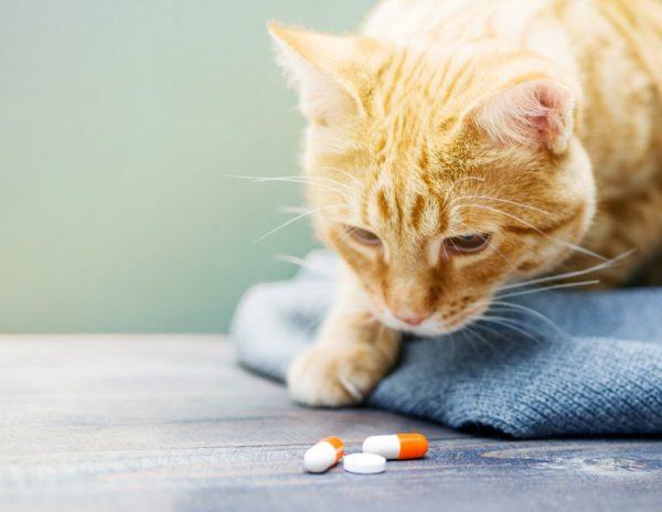 Кот смотрит на таблетки