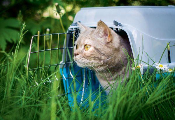 Кот в переноске на траве
