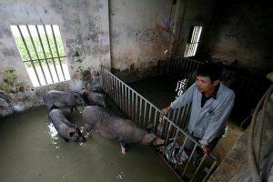 В Азии разбушевалась крупнейшая в истории эпидемия животных