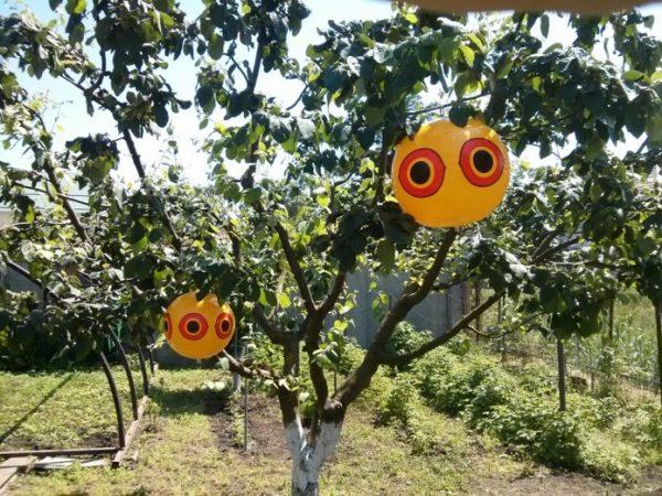 Шары с нарисованными кругами, имитирующими глаза совы