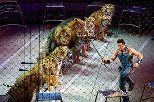 животные в цирке