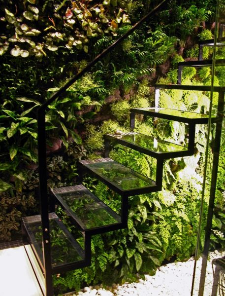 Растения под лестницей