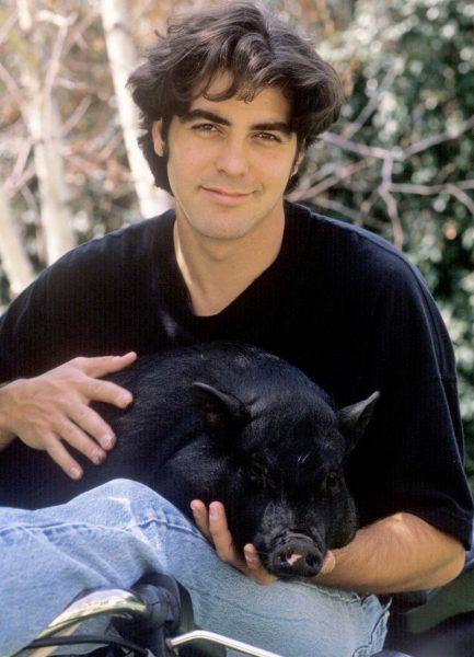 Джордж Клуни с чёрным мини-пигом на руках