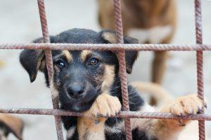 породистые собаки за решеткой