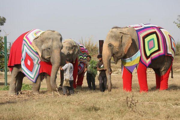 слоны в одежде