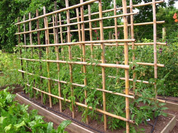 Решетчатая конструкция из бамбука