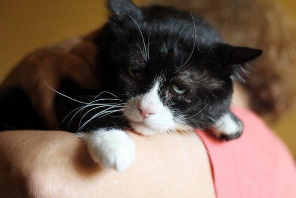 кот по кличке Филя