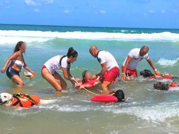 собаки спасают людей из воды