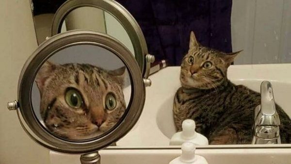 фото удивленной кошки в раковине