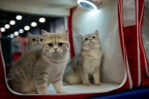 клонированный кот чеснок