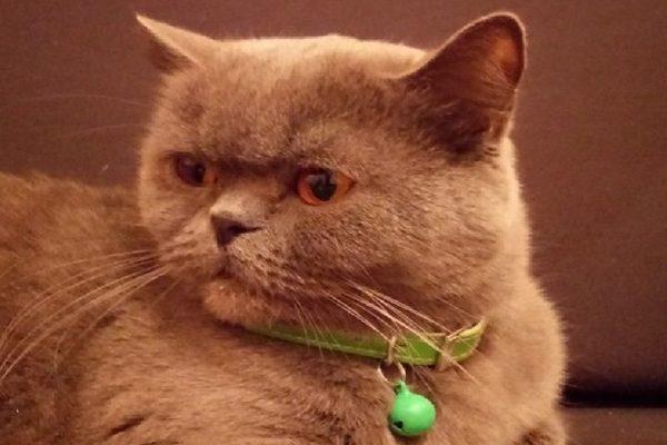ростовчанин продает кошку за 15 миллионов